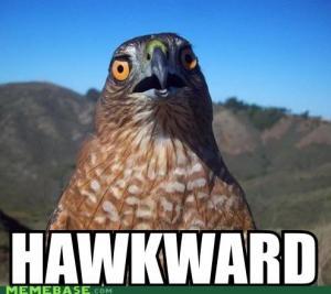hawkward2